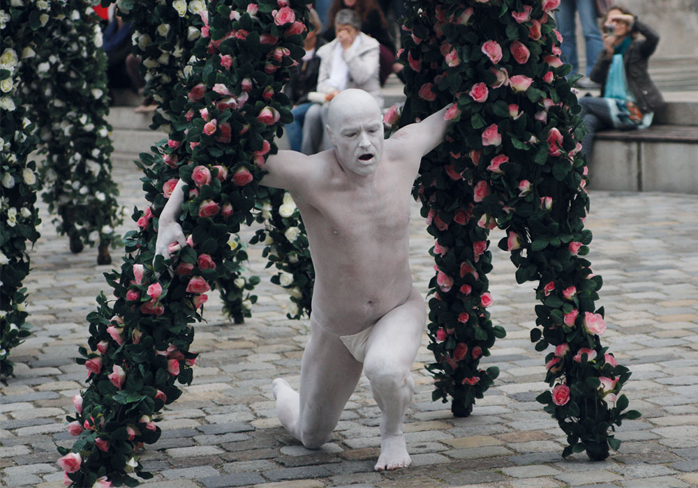 zebra-walking-roses_butho_500x350px_@2x