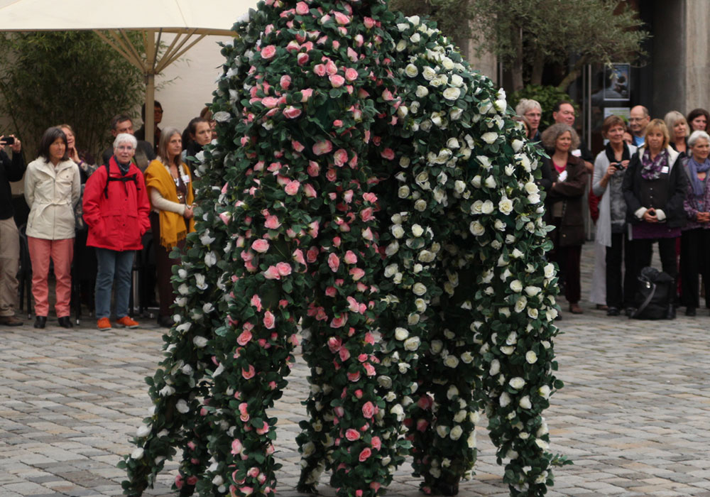 zebra-walking-roses_pulk_500x350px_@2x