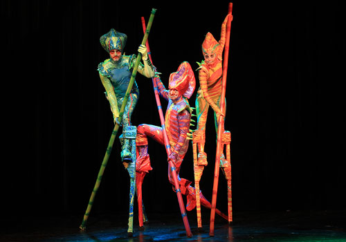 zebra-chameleon_stage_500x350px